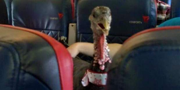 A turkey flew on US carrier Delta in January. Photo / Imgur