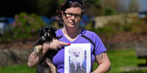 Loading Chelles McIntosh with her chihuahua Benicio and a photo of Fizzgig that died after an attack by a larger dog in Yatton Park. Photo / George Novak