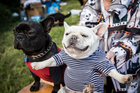Some pampered pooches tucked into possum patties at the  Great Dog Morning Tea in Remuera yesterday. Photo / Michael Craig