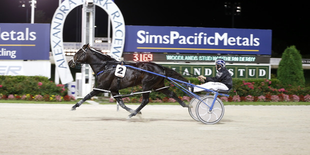 Lazarus has opened odds-on with some bookies to win the Flying Stakes at Ashburton on Monday. Photo / Michael Craig
