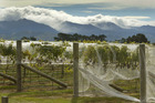 Ruahine Ranges and Central Hawkes Bay vineyard. Photo / Warren Buckland