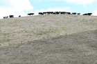 The 2013 drought that parched the soils of farms like this one in Northland cost the country $1.3 billion. Photo: File