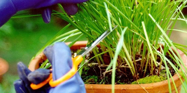 Gardeners are being warned to take care this long weekend to protect themselves with Legionnaires' disease. Photo/file