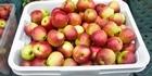 Watch: Listen: Alan Pollard's billion dollar apple industry