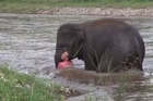 Source: YouTube: elephantnews