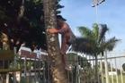 Malakai Fekitoa scales a coconut tree with ease. Photo / Facebook
