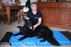 Dog owners are paying up to $85 an hour for massage therapy for their four-legged friends. Helen Morphew from Auckland Canine Massage speaks to the Herald about her job.