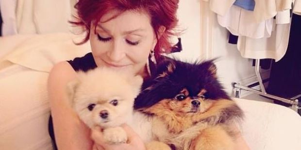 Sharon Osbourne flies her beloved two dogs with her... first class on Air New Zealand flights. Photo / via Instagram