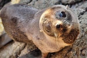 A seal pup snapped by marine enthusiast Nathan Pettigrew at Mount Maunganui. Photo/Nathan Pettigrew