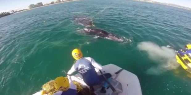 The pair became entangled in the nets off Coolangatta Beach.