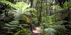 Waitakere Ranges. Photo / NZ Herald