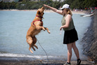 Emma Hayes from Ellerslie and her dog Loki playing in the holiday sunshine at Kohimarama Beach yesterday. Photo / Dean Purcell