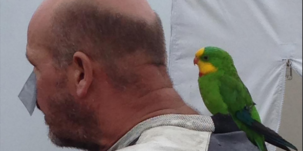 Guy Lowe with his parrot Reggie. Photo / Facebook