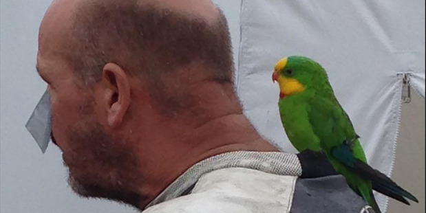 Motorcycle racer Guy Lowe with his parrot Reggie.  Photo / Supplied