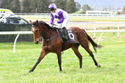 Hotshot Lass will attempt to improve her record when she runs in the Life Education Trust Handicap.