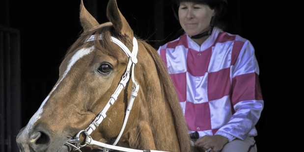 TOP CLASS: Ohope Prince, trained by Jim Pender, is running at Tauranga tomorrow. Photo/Toya Heatley