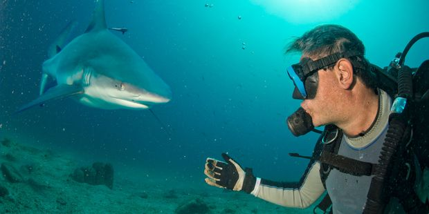 Scuba diver and grey shark. picture / 123RF