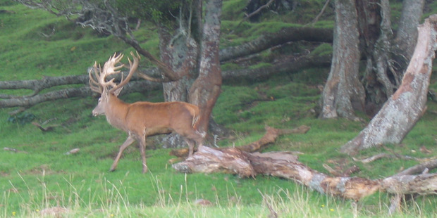 The farmer in Central Otago alleges the group said they were looking for deer and had been spotlighting on a Department of Conservation block. Photo / File