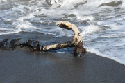 Ocean acidification and degraded coastlines are major issues for New Zealand.