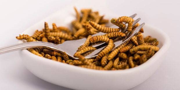 A new report shows insects could be a nutritious part of our diet. Photo / 123RF