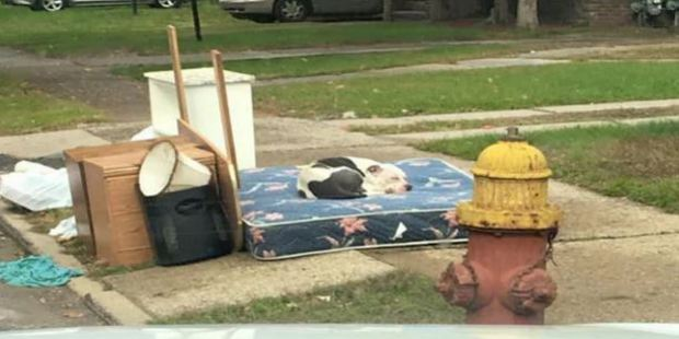 Boo the dog was abandoned with the family's rubbish. Photo / Facebook / Detroit Youth and Dog Rescue
