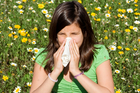If you grew up on a farm you may be less likely to suffer from hay fever. Photo / iStock