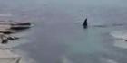 Watch: Watch: Orca gets close on North Island's Mahia coast
