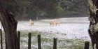 View: Photos: Hail hits New Zealand