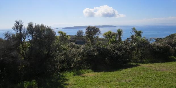 The Defence land overlooks the Tiritiri Matangi Wildlife Sanctuary -- many birds from the island visit. Photo /Paul Charman