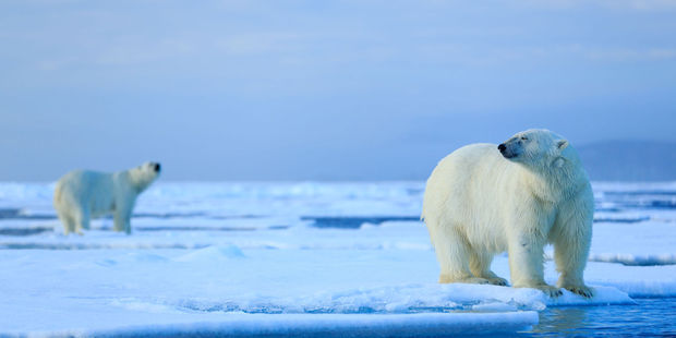 A long-term retreat of Arctic sea ice is already causing profound changes. Photo / 123RF