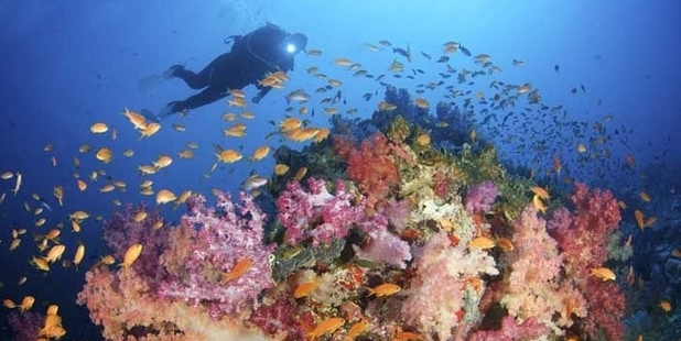 Volivoli Island resort is a haven for divers.