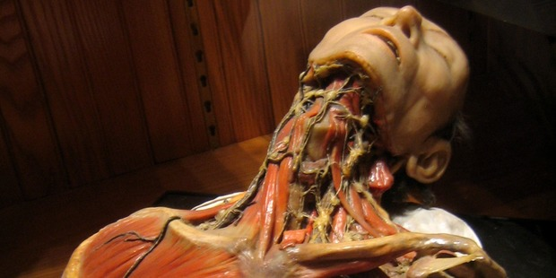 Be horrified and intrigued at the Muetter Museum. Photo / Supplied