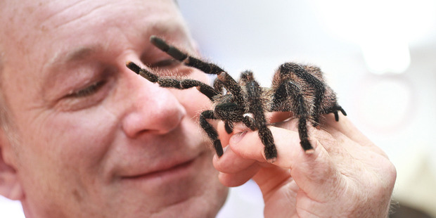 Loading Creepy-crawly enthusiast Brian Lawton with a tarantula spider. Photo / Doug Sherring