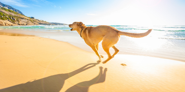 A dog can be an energetic travelling companion. Photo / 123RF