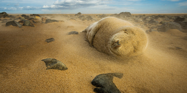 Eugene Kitsios says he was photographing this young grey seal when they both got caught in a sandstorm. Photo / Eugene Kitsios/National Geographic