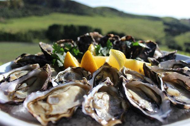 Oysters freshly shucked on Waiheke / Te Matuku Oysters Facebook page