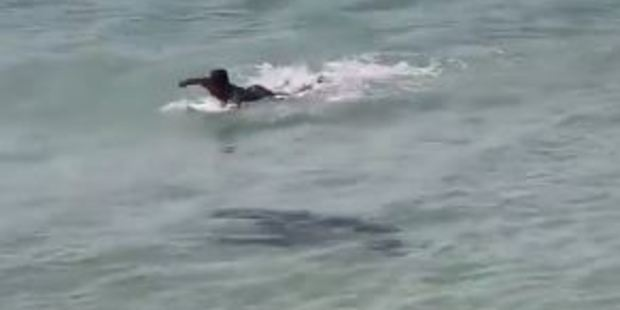 Loading A shark was spotted swimming near surfers at Byron Bay. Photo / YouTube: Brosharsadventures