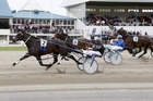 Lazarus will carry punters' hopes and money in the NZ Trotting Cup at Addington today. Photo / NZ Racing Desk