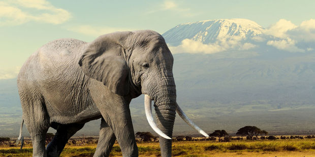 Patrick Cooper is the second person to be convicted of importing ivory into New Zealand. Photo/File
