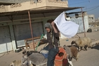 A man raises a white flag as he rides his donkey to safety after fleeing Mosul. Photo / AP