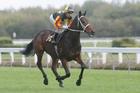 Ringo. File photo/ NZ Racing Desk