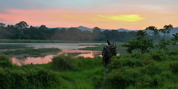 Chitwan National Park, Nepal. Photo / Lisa Pagotto, Crooked Compass