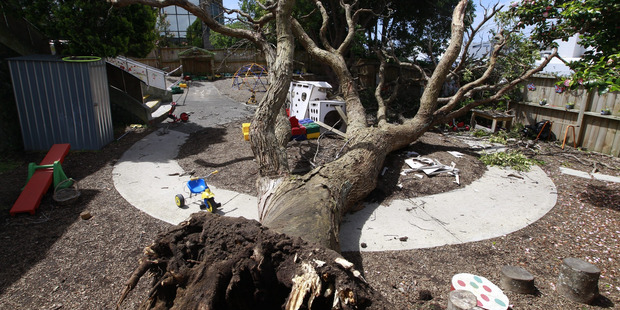 Loading More than two dozen toddlers were in this daycare playground when a tree toppled to the ground. Photo/Nick Reed.