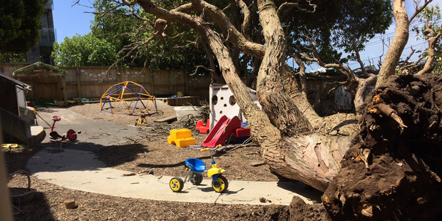 An upturned tree at the Discoveries Educare facility on Gillies Ave, Newmarket. Photo / Cherie Howie