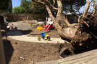 The upturned tree that  injured children at the Discoveries Educare facility in Auckland's Newmarket yesterday. Photo/Cherie Howie