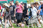 Bring the dog and the family to the VETPlus Dogs Day Out and help raise funds for the SPCA.  Photo/Ben Fraser