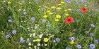Watch NZH Local Focus: Hastings wildflower display delights