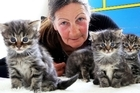 Cat Lady, stray cats for re-homing,31A Wembley Place,Robyn Dandy 021 209 7028