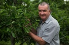 Pipfruit NZ chief executive Alan Pollard poised with fruit set for largest ever apple crop grown in New Zealand