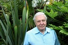 English naturalist and broadcaster Sir David Attenborough at his home in Richmond, London. Photo / Getty